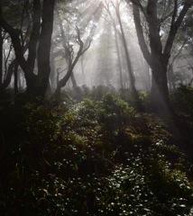 高原の目覚め…