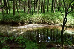 森の中のリフレクション