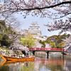 姫路城 桜 4