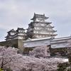 姫路城 桜2