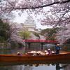 姫路城 桜 観光日和1