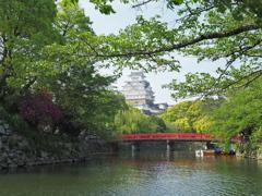 姫路城桜・・1か月後
