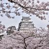 姫路城 桜1