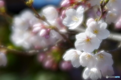 咲き始め。~FAソフトで~