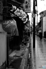 京おどりの季節