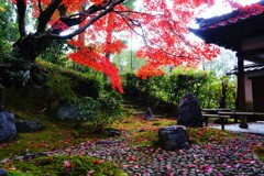 紅葉浄土~京都栄摂院 Eisho-in Temple Autumn Leaves