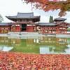 鳳凰散紅葉~京都  Byōdō-in Temple