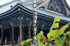 驟雨の西本願寺~京都 Nishi Hongan-ji in the rain