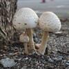 お西さんの茸~西本願寺 Mushrooms,Nishi Hongan-ji