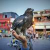 猛禽、フナ広場を睥睨~モロッコ un rapaz y un viejo