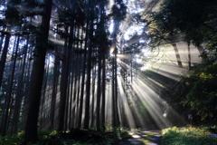 光降り注ぐ森の小道