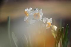 早春の気配2