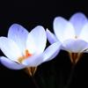 早春の花2