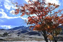 高原の秋2