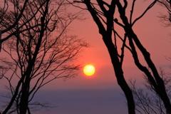 樹間の朝日
