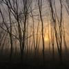 木立の中の陽