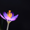 早春の花1