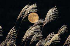 11月12日の満月