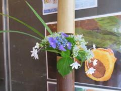 お洒落な紫陽花