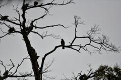 夕暮れの鳥たち