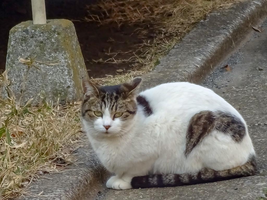 練馬のぷくぷくネコ