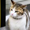 2016年3月築地場外市場の猫ちゃん