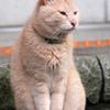 江ノ島の猫ちゃん・2016年夏その2