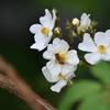 花とミツバチ 西油山