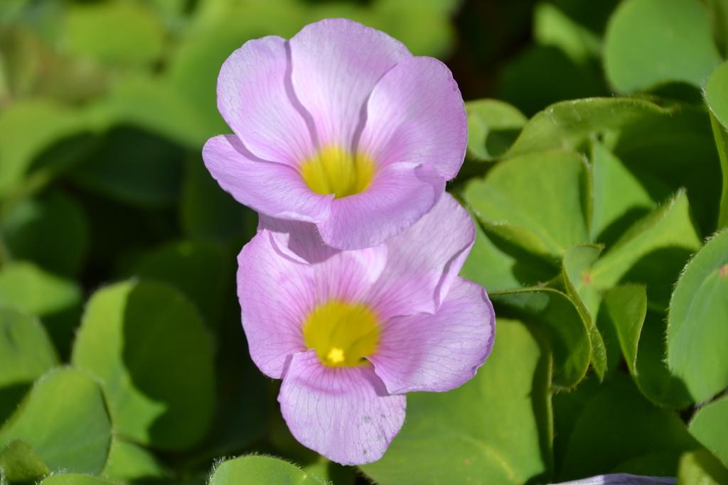 庭に咲いている名前のわからない花