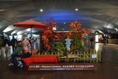 日本庭園紅葉 横浜港大さん橋国際客船ターミナル