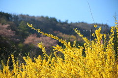 花見山の木々#6