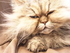 猫カフェ3#5
