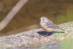初撮り鳥#2