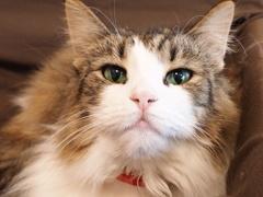 猫カフェ3#3