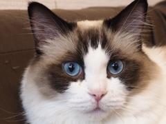 猫カフェ3#4