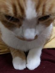猫の手も借りたいฅ(^^ฅ)