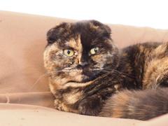 猫カフェ3#9