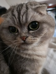 Huaweiカメラ検証(猫)