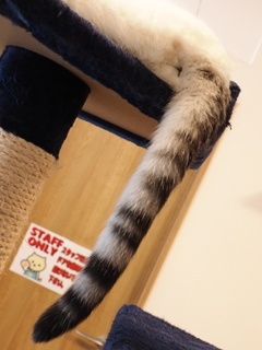 猫カフェ3#8
