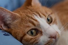 今日は世界猫の日ですニャー(=^・^=)