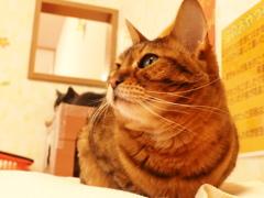 猫カフェ3#1