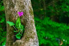 自然の花瓶