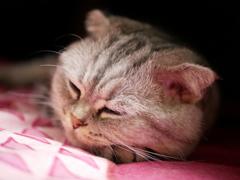 我が家のネコ#4