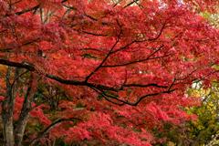 紅葉真っ盛り!!