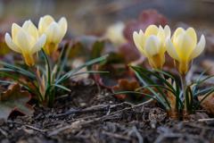春の光?!