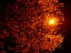 夜の街路樹#2