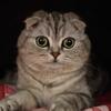 家猫(ピノ)