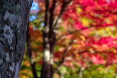 玉ボケも紅葉。。。