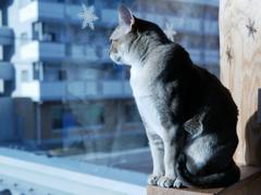 猫カフェ2#1(外にでたいなぁ)