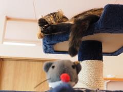 猫カフェ3#10